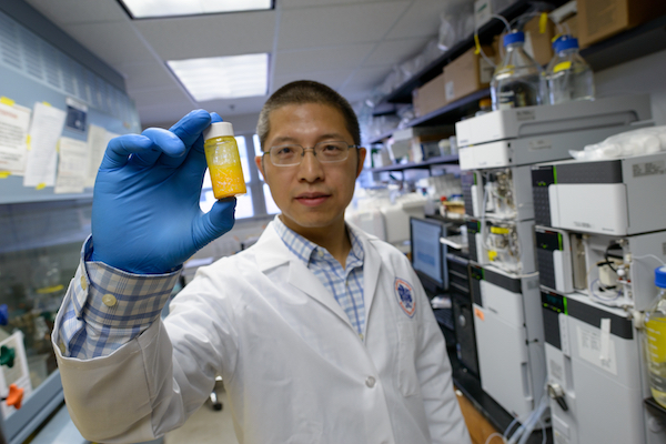 Yousong Ding, Ph.D., ans assistant professor of medicinal chemistry, displays a bottle of extracted thaxtomins.