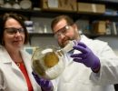 Chris McCurdy, Bonnie Avery and Francisco Leon conduct kratom research to treat pain and addiction