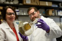 Bonnie Avery, Ph.D., a clinical assistant professor of pharmaceutics, and Chris McCurdy, Ph.D., a professor of medicinal chemistry, hold up a flask of kratom, or Mitragyna speciosa, in a laboratory at the University of Florida. Researchers at the UF College of Pharmacy research kratom's potential to wean addicts off opioids.